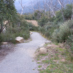 Walking along Bullocks Track (296519)