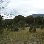 Walking through Muzzlewood Flats (296678)