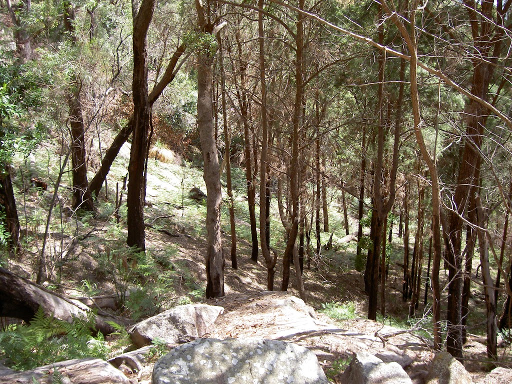 Forest on the steep climb out of The Basin