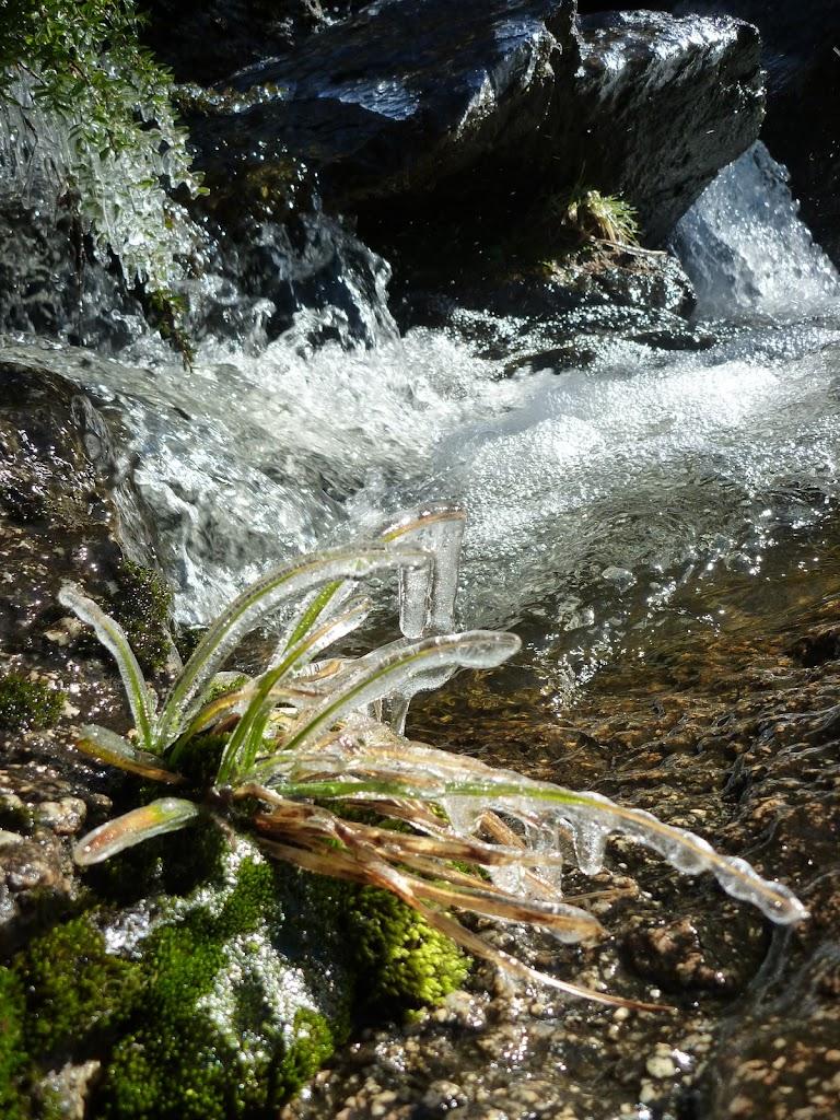Icy plants beside Sawpit Creek falls in Kosciuszko National Park