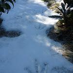 Friends' footprints in fresh snow (297626)