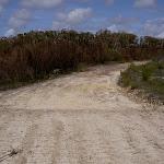 Mackerel Beach service trail (29858)