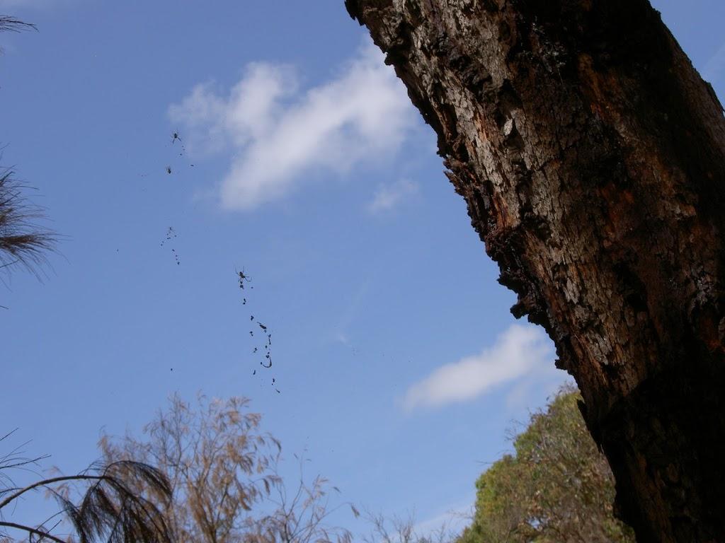 Spider web on Mackerel track