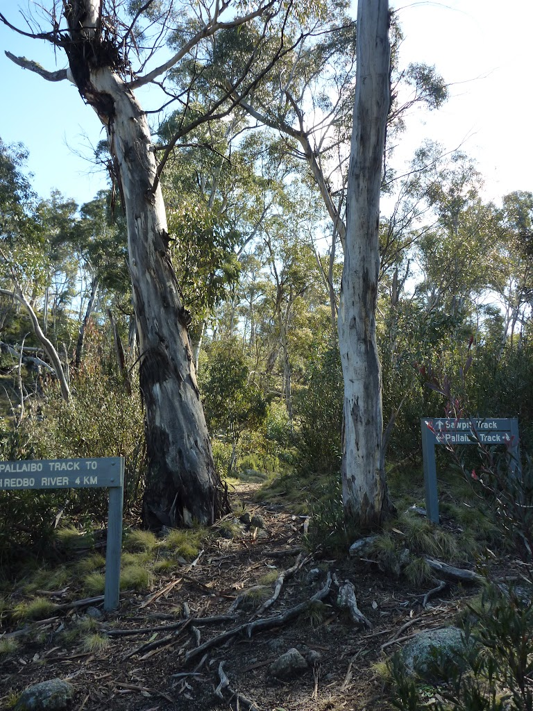 Sawpit Track passing between these trees