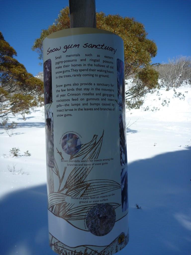 Snow gum sanctuary sign
