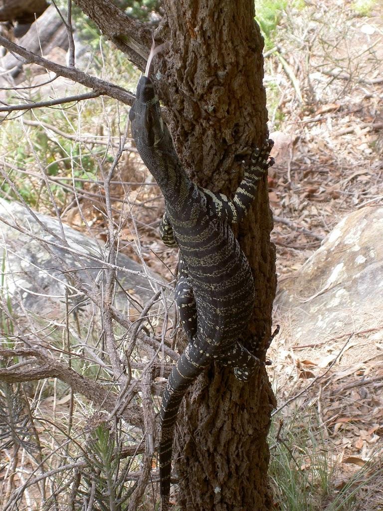 A local climbing a tree