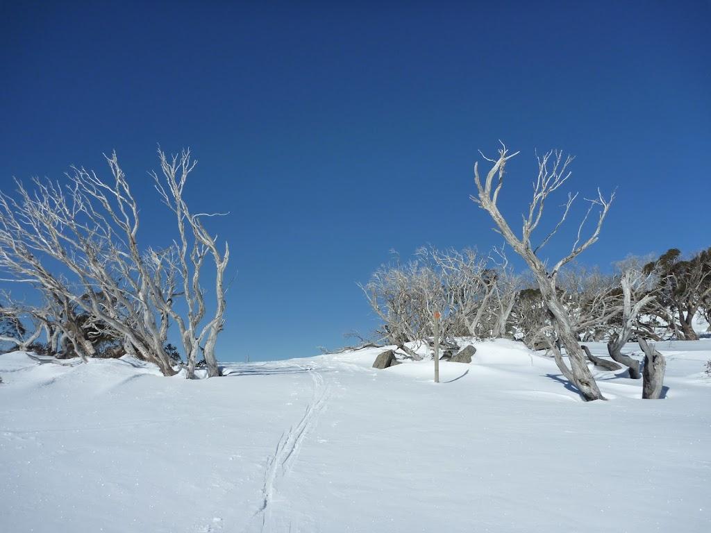 Snow gums on the Wheatley Link (300616)