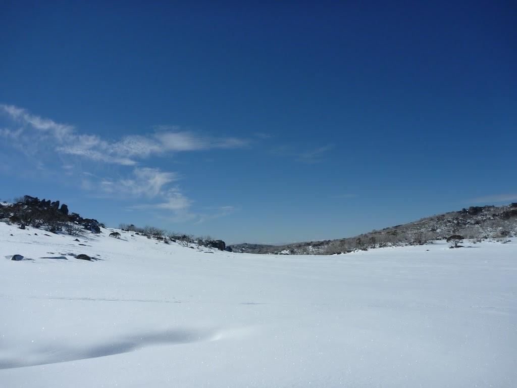 Pure snow (300637)