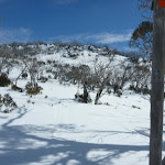 Walking toward Mt Piper (301507)