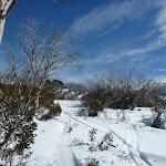 Walking through the snowgums (301645)