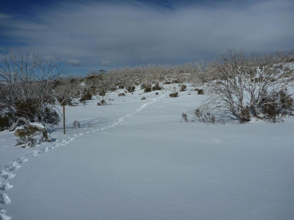 Snowshoe tracks (301699)