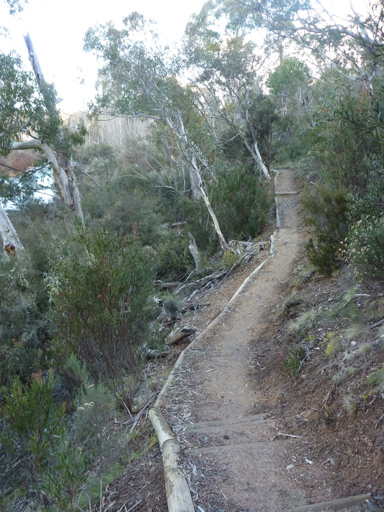 Pallaibo Track near the Thredbo River (302698)