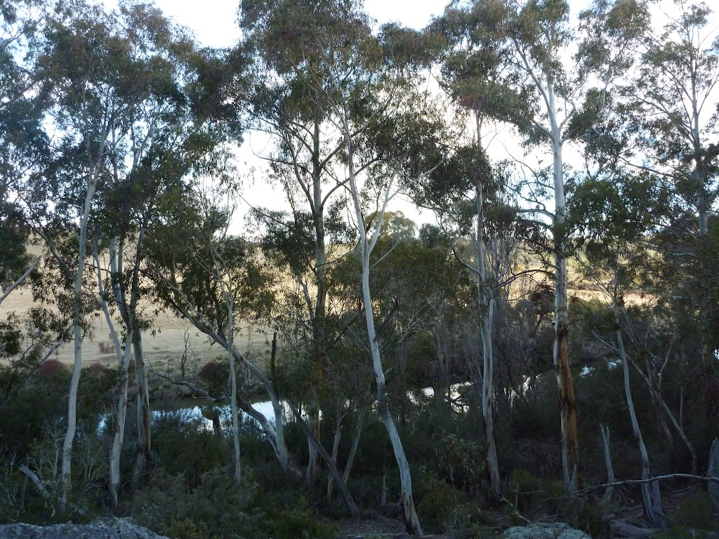 Glimpse of the Thredbo River