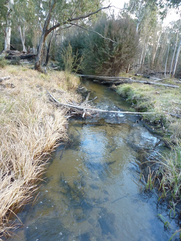 Lower end of Sawpit Creek