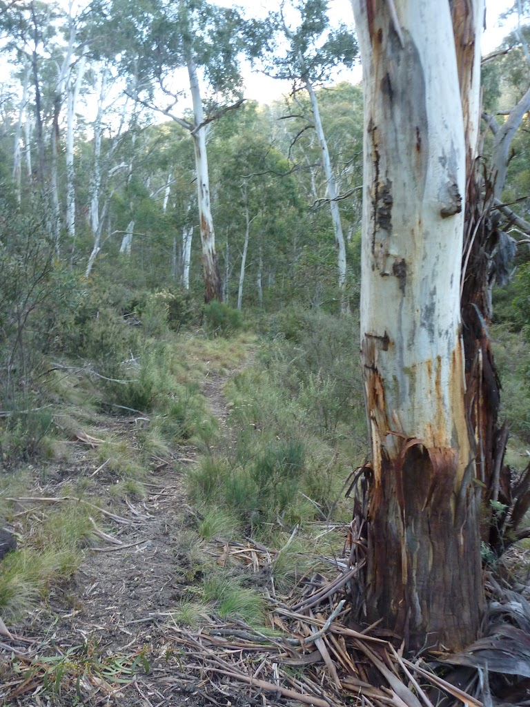 Walking along Sawpit Creek valley floor on the Pallaibo Track