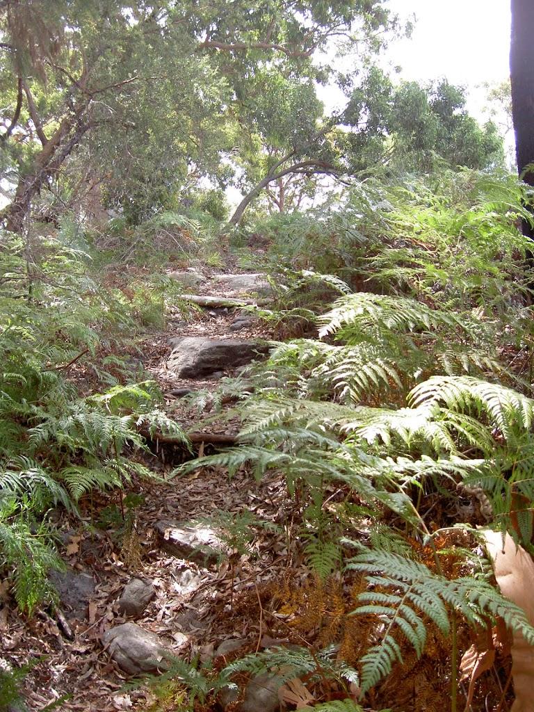 Track through ferns to Mackerel Beach