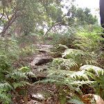 Track through ferns to Mackerel Beach (30344)
