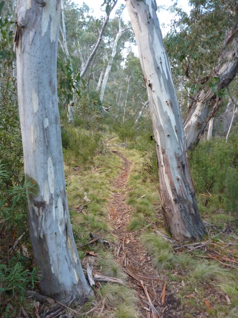 Walking along the Sawpit Creek valley floor on the Pallaibo Track
