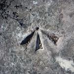 Aboriginal Engaving close to Elvina track (304038)