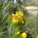 Wild Flowers on Elvina Track