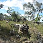 Rocks next to Elvina Track (304362)