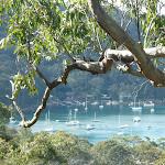 Views of Elvina Bay from Elvina Track (304482)