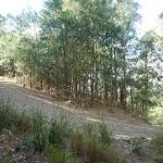 Elvina Track through She Oak (304518)