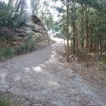 Elvina track near West Head Rd (304521)