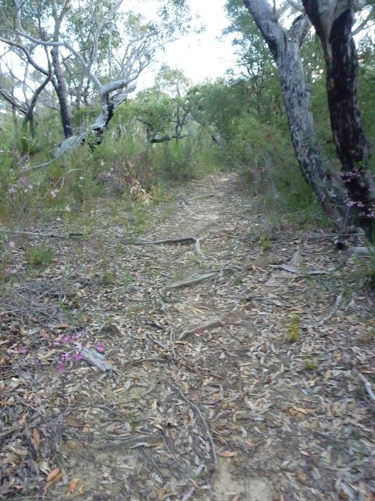 Walking along Fredericks Track