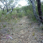 Walking along Fredericks Track (305619)