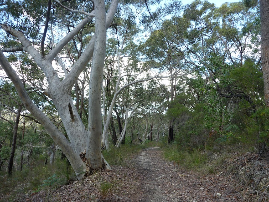 Track to Nerang Viewpoint (305948)