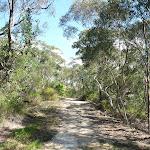 Perimeter Trail near Terrey Hills (306062)