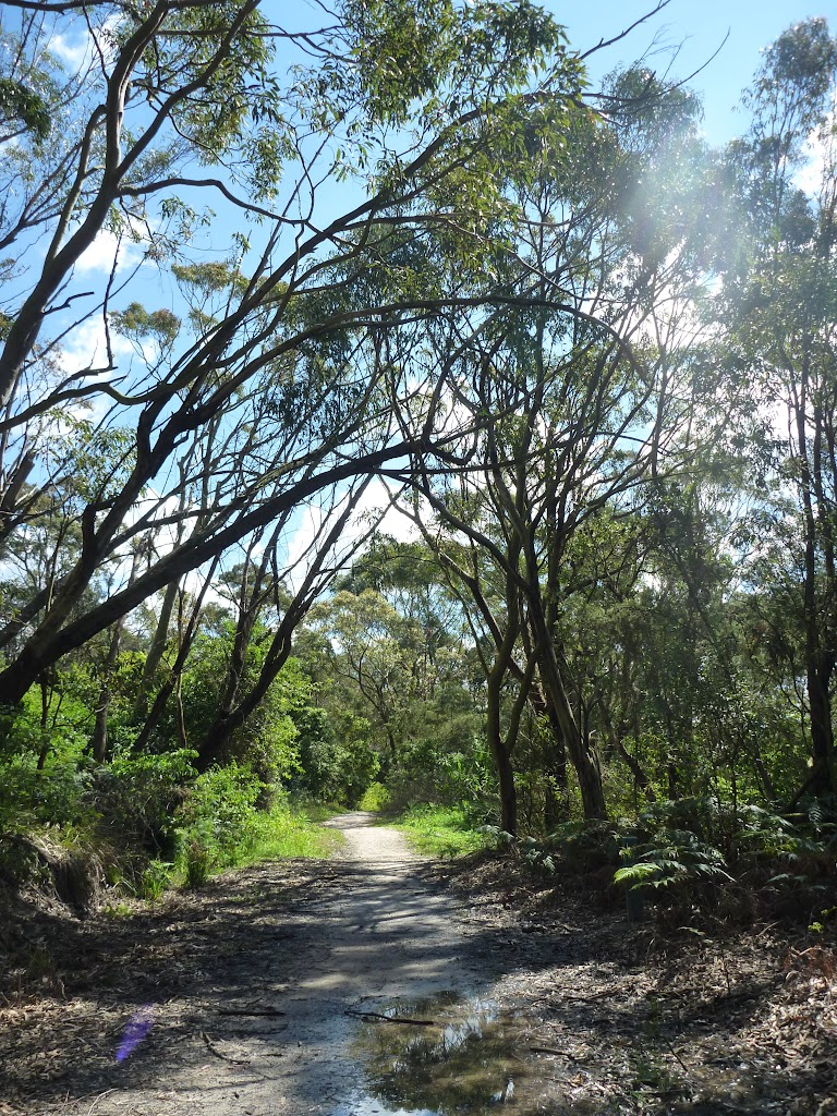 Perimeter Trail near Terrey Hills (306143)