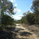Smiths Creek Trail near Terrey Hills (306398)