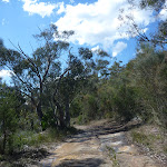 Smiths Creek Trail near Terrey Hills (306485)
