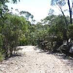 Smiths Creek Trail near Terrey Hills (306503)