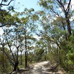 Smiths Creek Trail near Terrey Hills (306515)