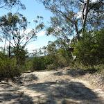 Smiths Creek Trail near Terrey Hills (306554)