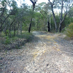 Smiths Creek Trail near Terrey Hills (306581)