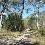 Smiths Creek Trail near Terrey Hills (306635)
