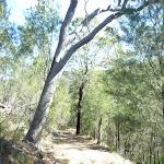Smiths Creek Trail near Terrey Hills (306641)
