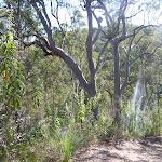 Smiths Creek Trail near Terrey Hills (306656)