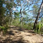 Smiths Creek Trail near Terrey Hills (306671)