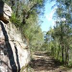 Smiths Creek Trail near Terrey Hills (306683)