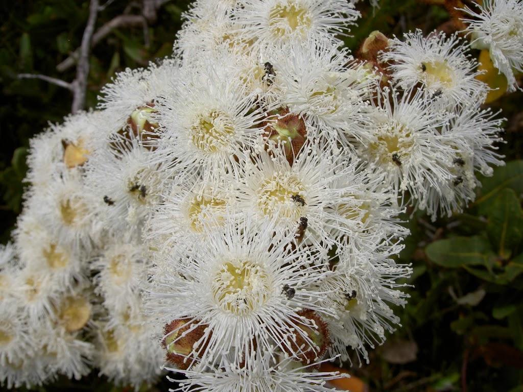 Bugs in flowers