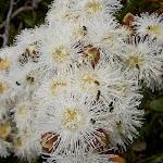 Bugs in flowers (30727)