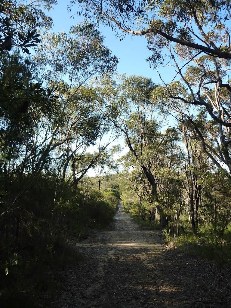 Wilkin's Track, near Terrey Hills