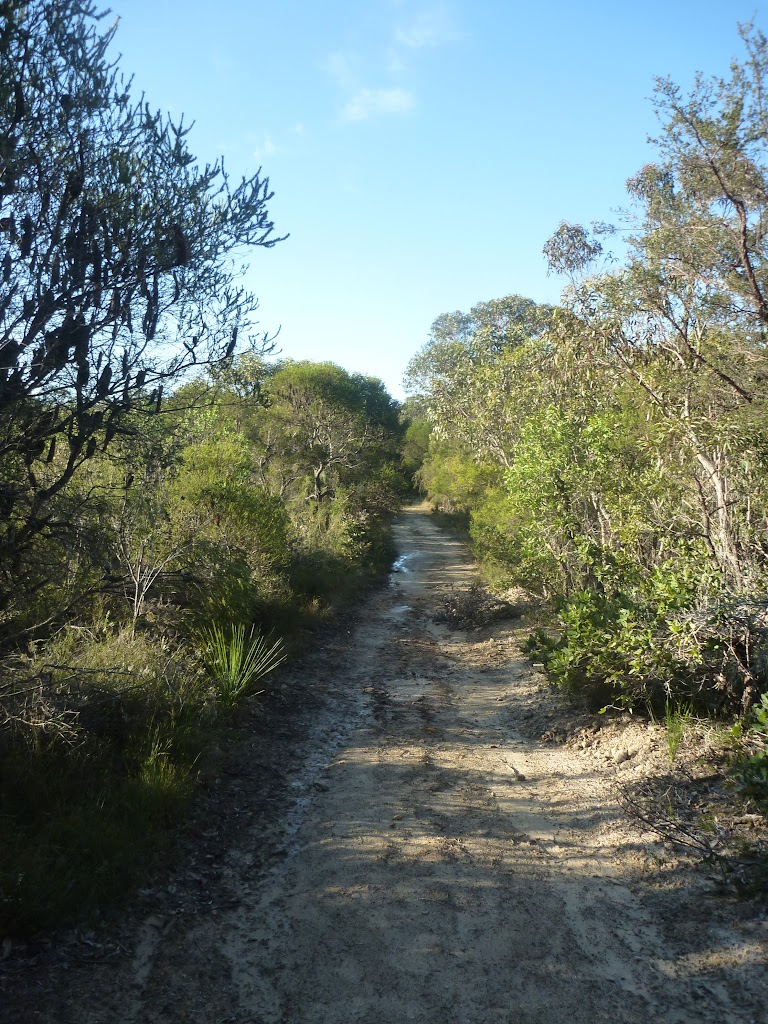 The sandy Wilkin's Track, near Terrey Hills