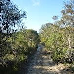 The sandy Wilkin's Track, near Terrey Hills