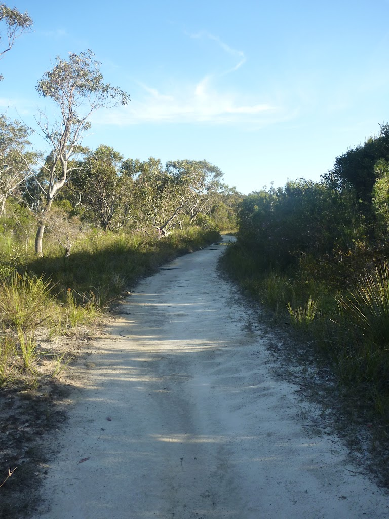 Wilkins Track, near Terrey Hills
